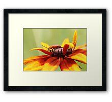 Bug on Yellow Flower Framed Print