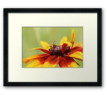 Bug on Yellow Flower 2 Framed Print