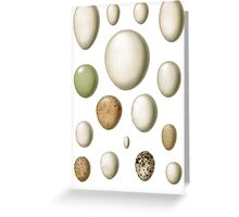 lovely egg collection Greeting Card