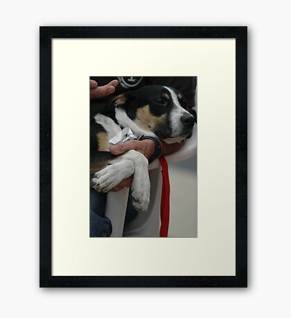 Post-Surgery Pup Framed Print