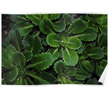 Succulent garden Poster