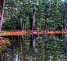 Evergreen Reflections by Michael Mill