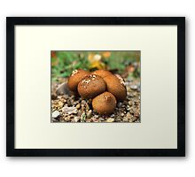 Fuzzy round things! I guess. Framed Print
