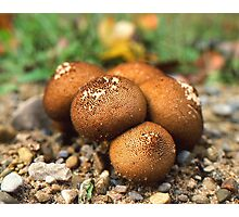 Fuzzy round things! I guess. Photographic Print