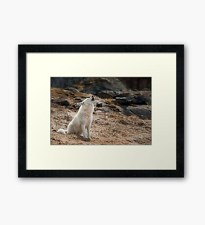 Howling Arctic Wolf Framed Print