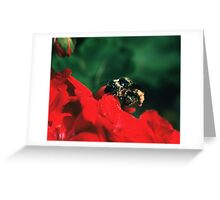 Bee on red flower Greeting Card