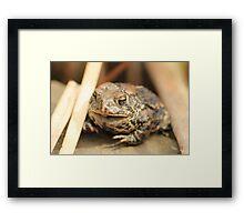 Toad on Rock Framed Print