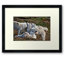 Playful Pack Framed Print