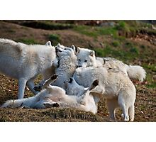 Playful Pack Photographic Print