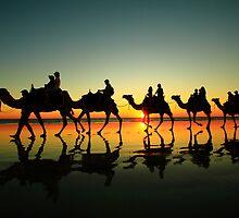 camel line by adouglas