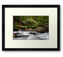 Dogwood Bonsai Tree Framed Print