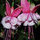 Fuchsia Twins by Tori Snow