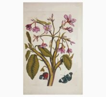 Metamorphosis insectorum surinamensium Maria Sibylla Merian 1705 0033 Insects of Surinam_jpg Kids Tee