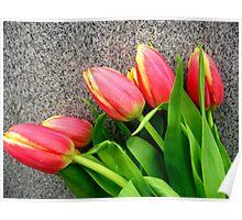 "Pink/Orange Tulips - ""Take a Bow"" Poster"