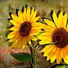 Double Sunshine by LudaNayvelt