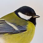 Great Tit Portrait by Janika