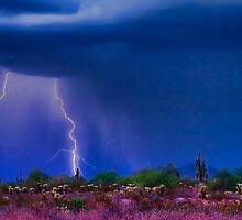 Desert Purple Storm by Bo Insogna