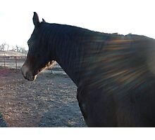Winged Horse Photographic Print