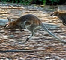 Jump Wallaby Sticker