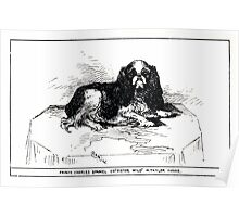 All about dogs a book for doggy people Charles Henry Lane 1900 0283 Prince Charles Spaniel_jpg Poster