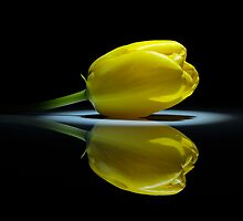 Yellow tulip on the mirror by Carlo Lonati
