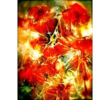 Red Poppies...Abstract. Photographic Print