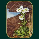 High Country Gentian Flower by Patricia Howitt