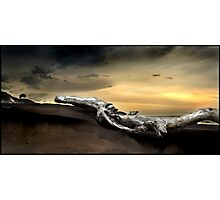 Blackrock Drift Log Photographic Print