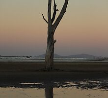 The Lonely Tree at the Beach by AlexKokas