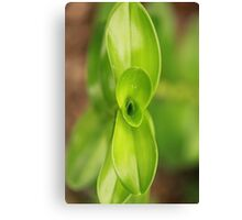 Opening Green Plant Canvas Print