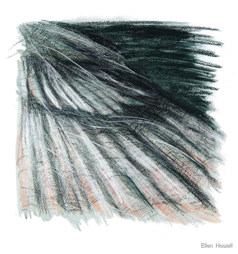 Grey Green Feathers - detail of a cormorants wing by Ellen  Howell