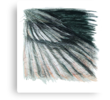 Grey Green Feathers - detail of a cormorants wing Canvas Print