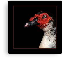 """chick magnet"" Canvas Print"