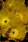 Spring ~ Pancho Villa State Park, NM by Vicki Pelham