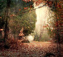 Walking alone... by Gisele Bedard