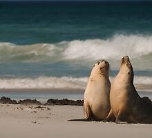 Sea Lion pair by louise