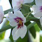 Orchids by Lauren Banks