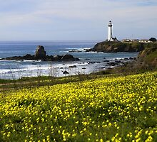 Pigeon Point Lighthouse by Jenn Ramirez