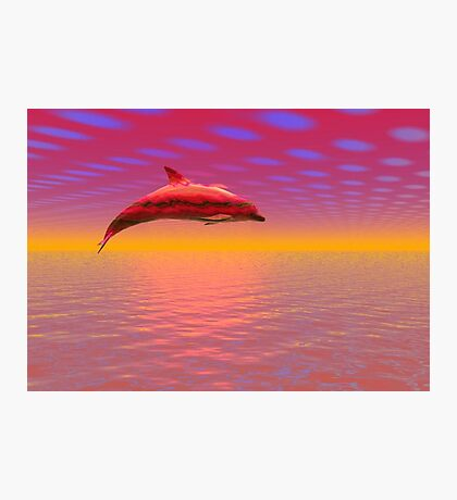 Dolphin Photographic Print