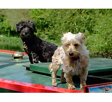 Canal canines Photographic Print
