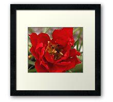 Flame Red Framed Print