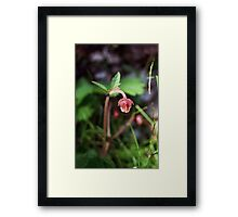Water avens Framed Print