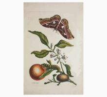 Metamorphosis insectorum surinamensium Maria Sibylla Merian 1705 0165 Insects of Surinam_jpg One Piece - Short Sleeve