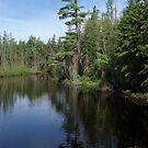 Tranquil Pond by John Schneider