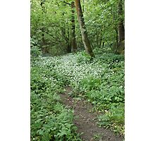 Path To Wild Garlic In Saltaire Woods Photographic Print