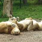 ...and the little one said roll over by Inquisitive4now