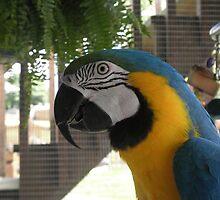 Rio by anotherbirdlady