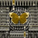 The Butterfly Machine by Rob Colvin