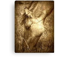 Grazing beauty Canvas Print