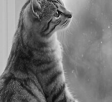 Can't Play Today It's Raining - A Tabby Cat at the Window by simpsonvisuals